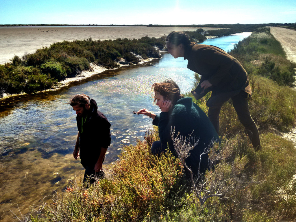 A view of the Algae Lab team in the Camargue wetlands. Photo © atelier LUMA